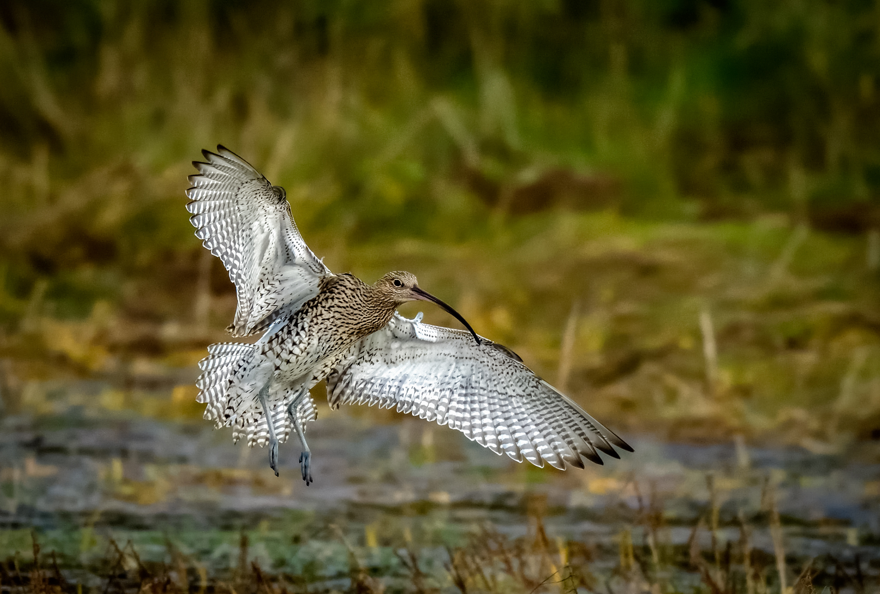 Curlew Landing by James Moir