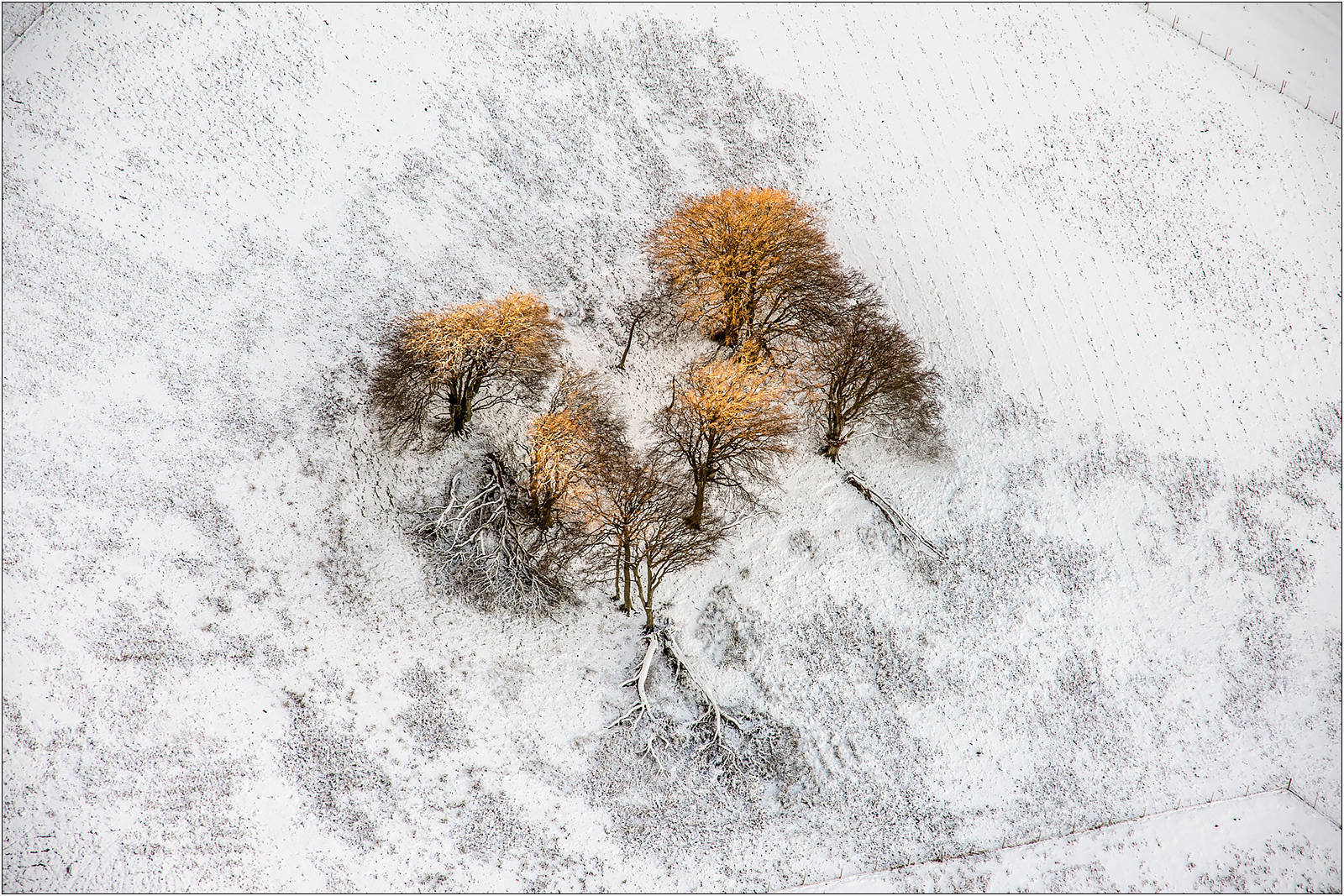 A stand of trees-1.jpg
