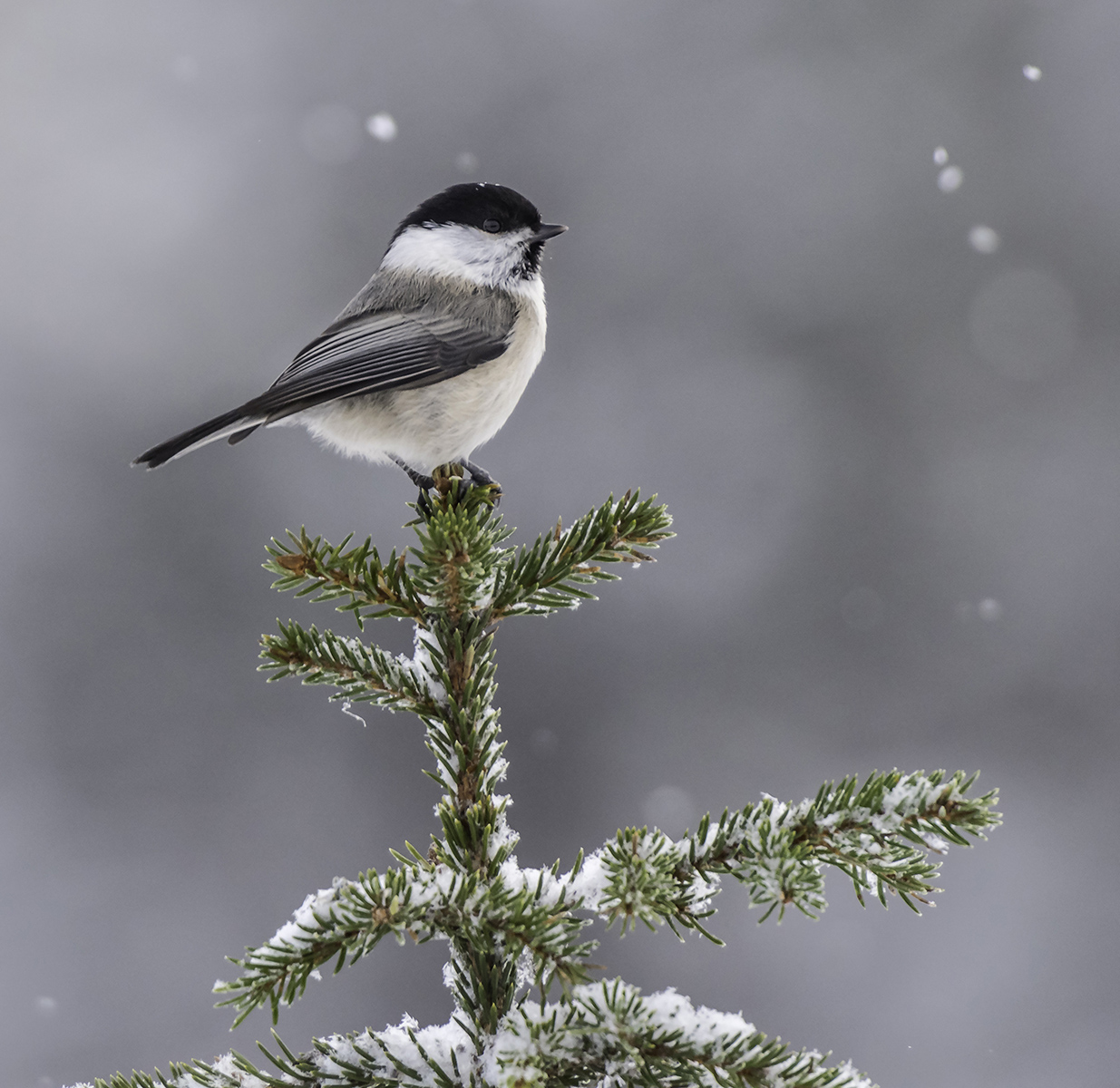 4 Birdsonetree -1.jpg