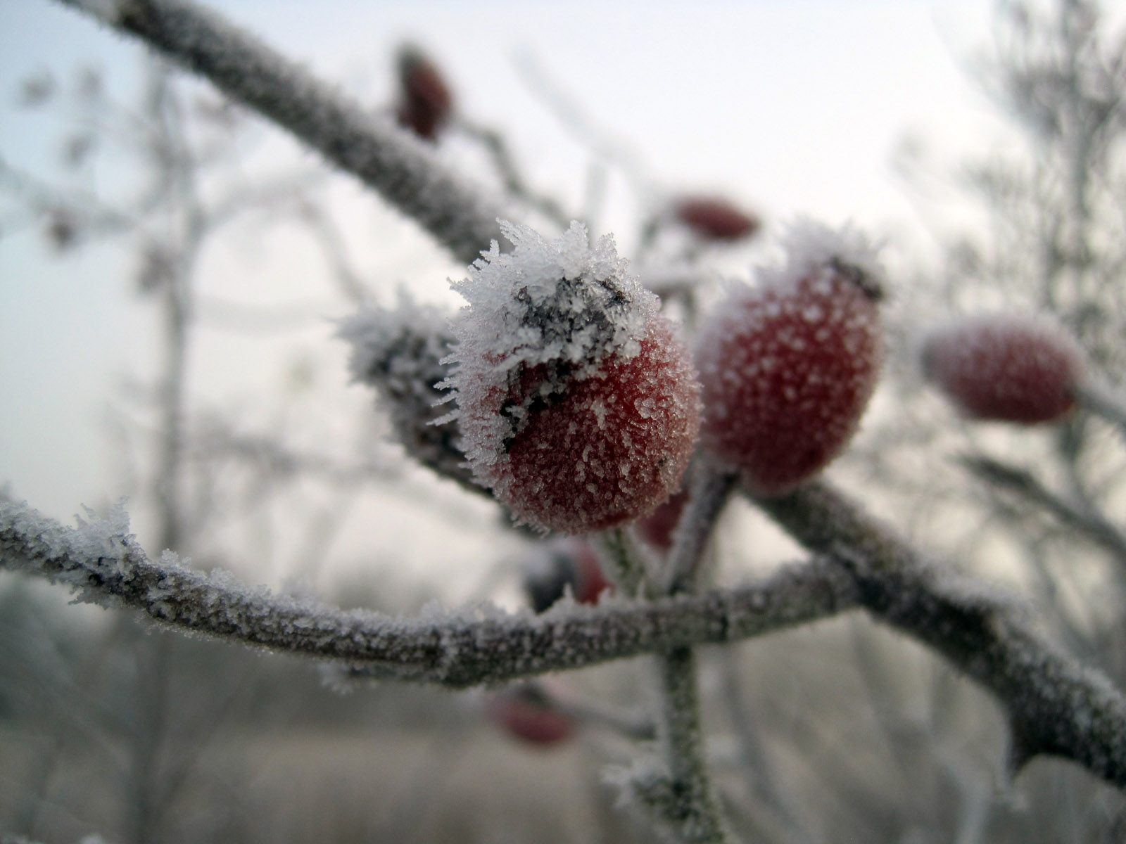 Frozen-fruits.jpg
