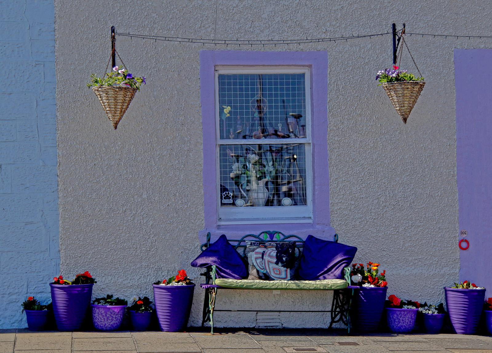 Violet house.jpg