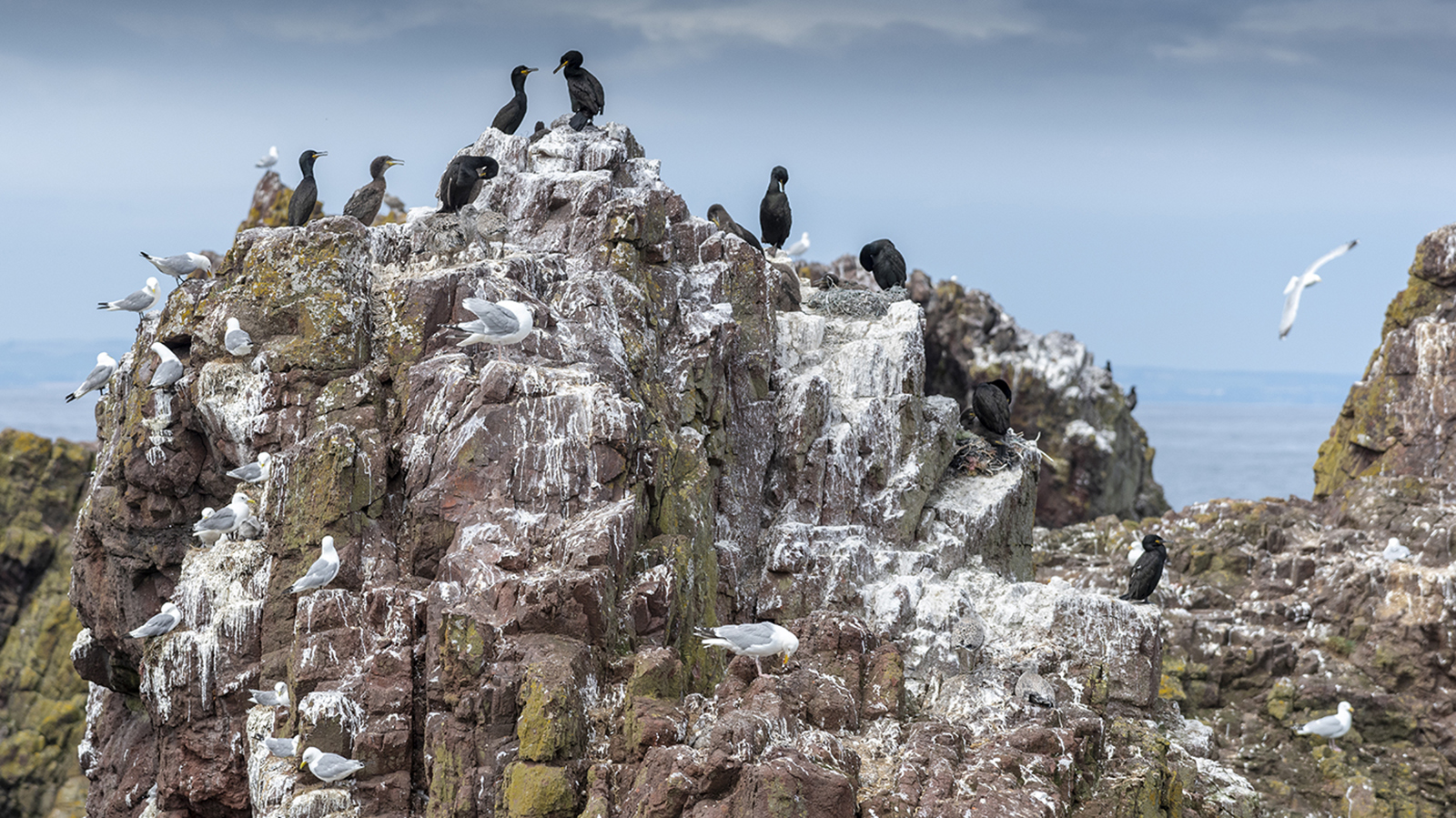 Cormorants and friends