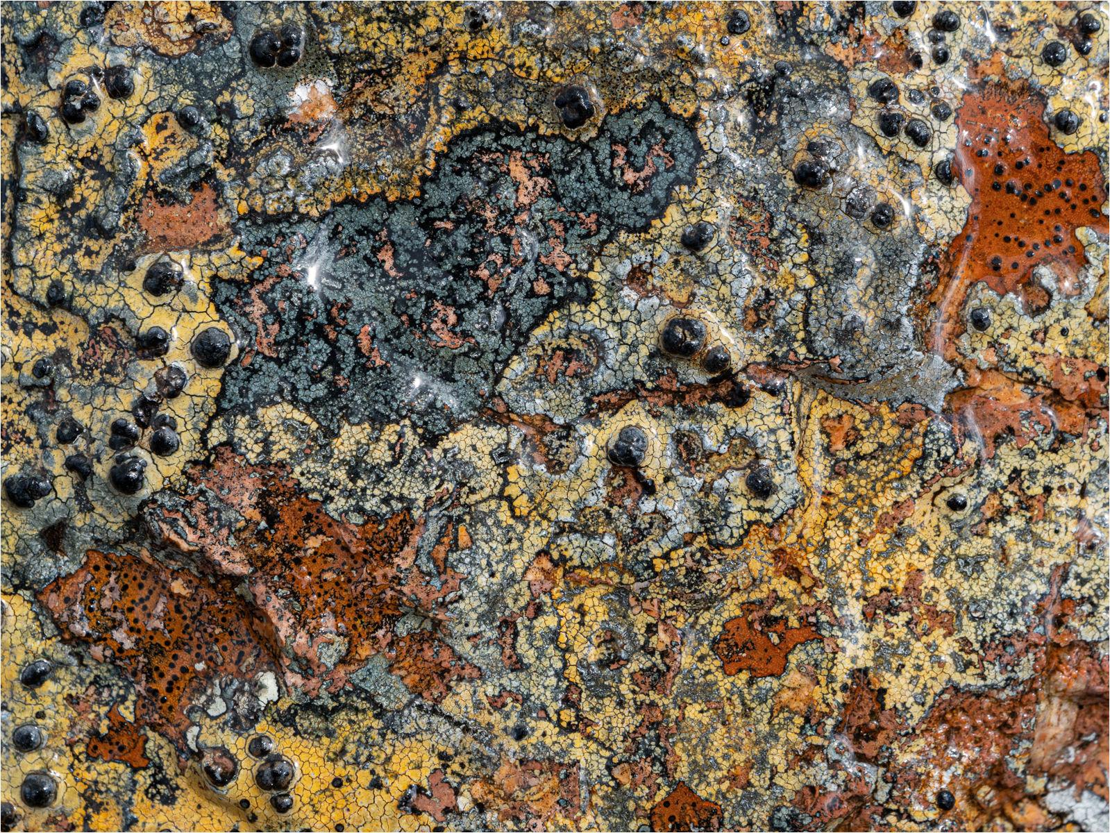 Lichen patterns