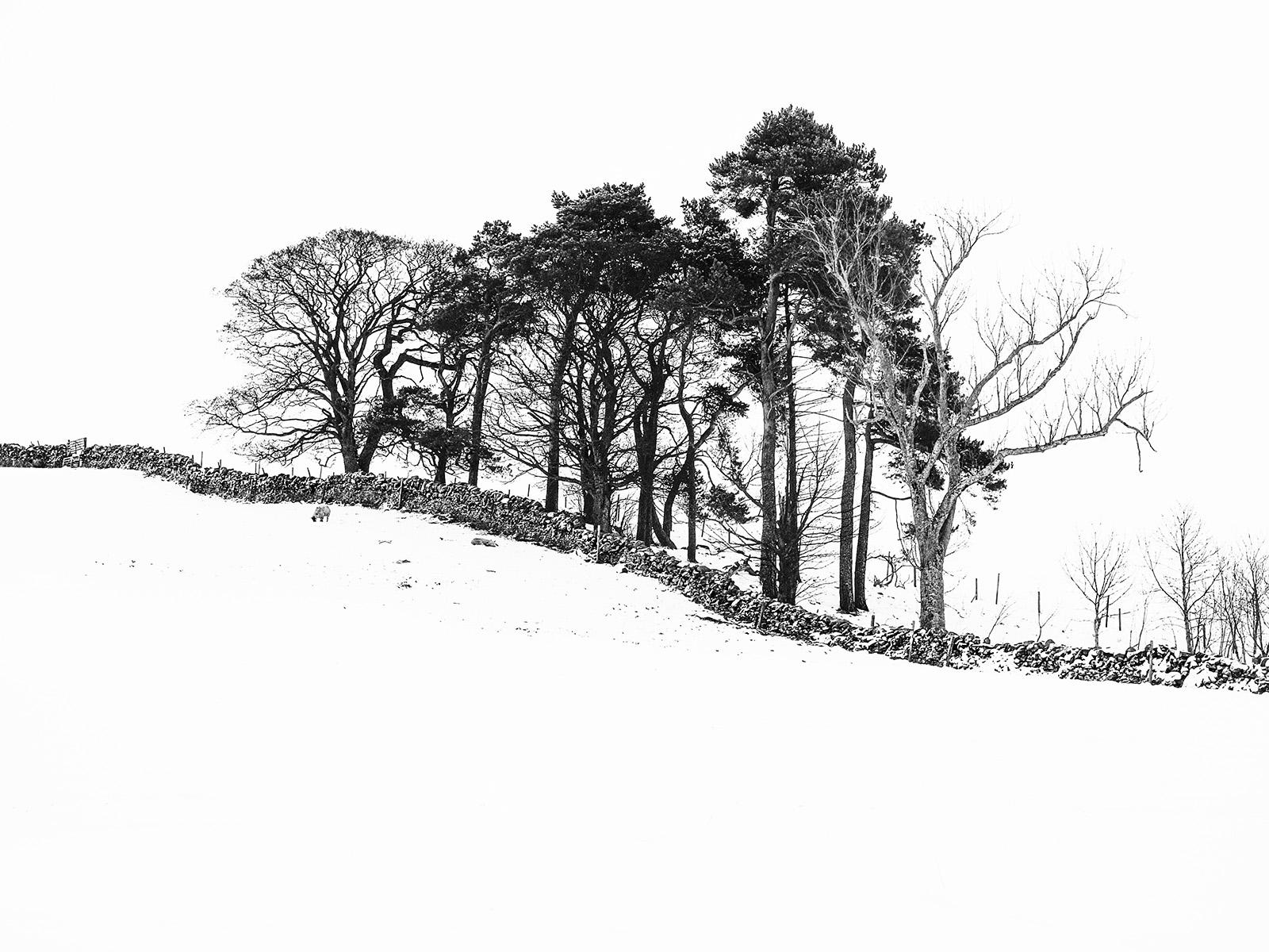 Snowy tree line