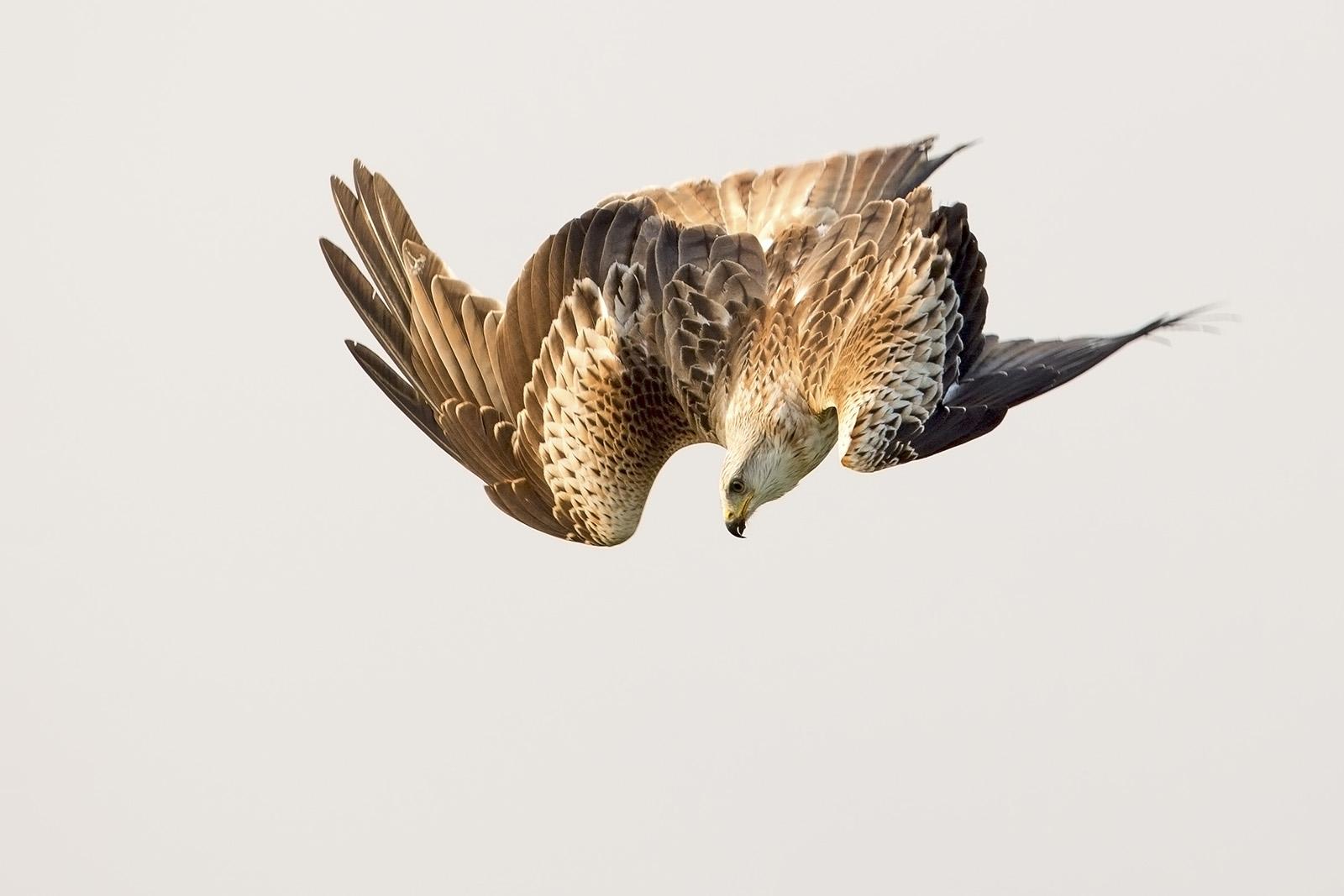 Kite drop