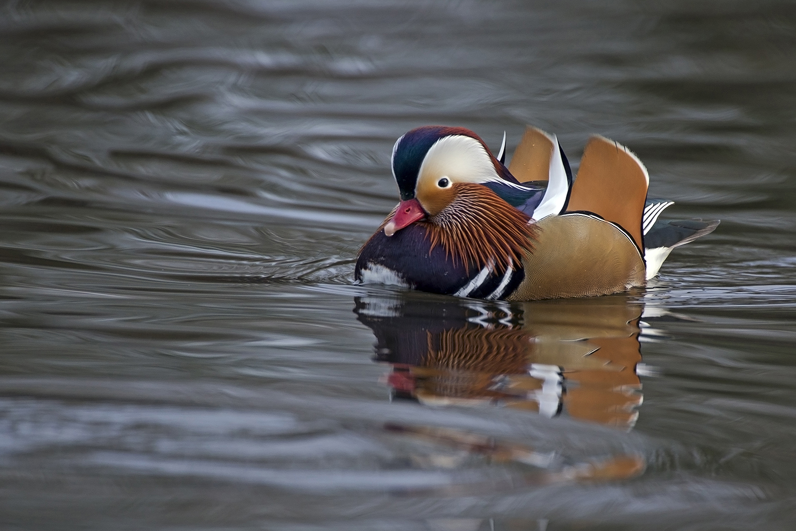 2 Mandarin - river tweed