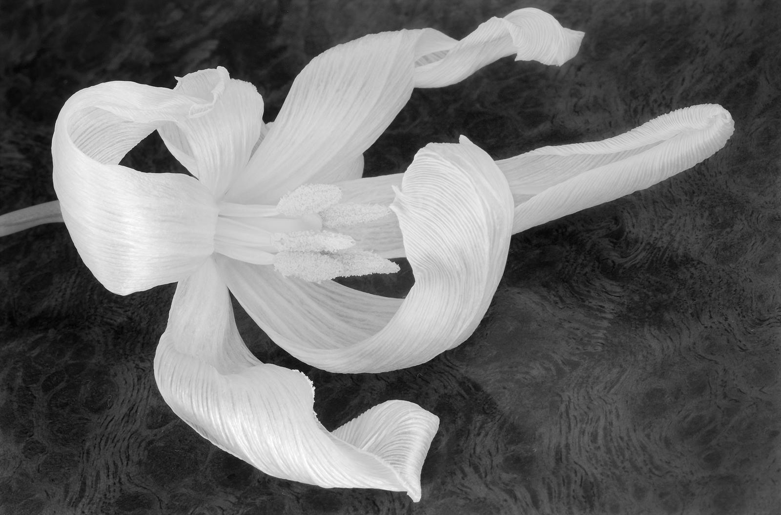 1-Tulip detail