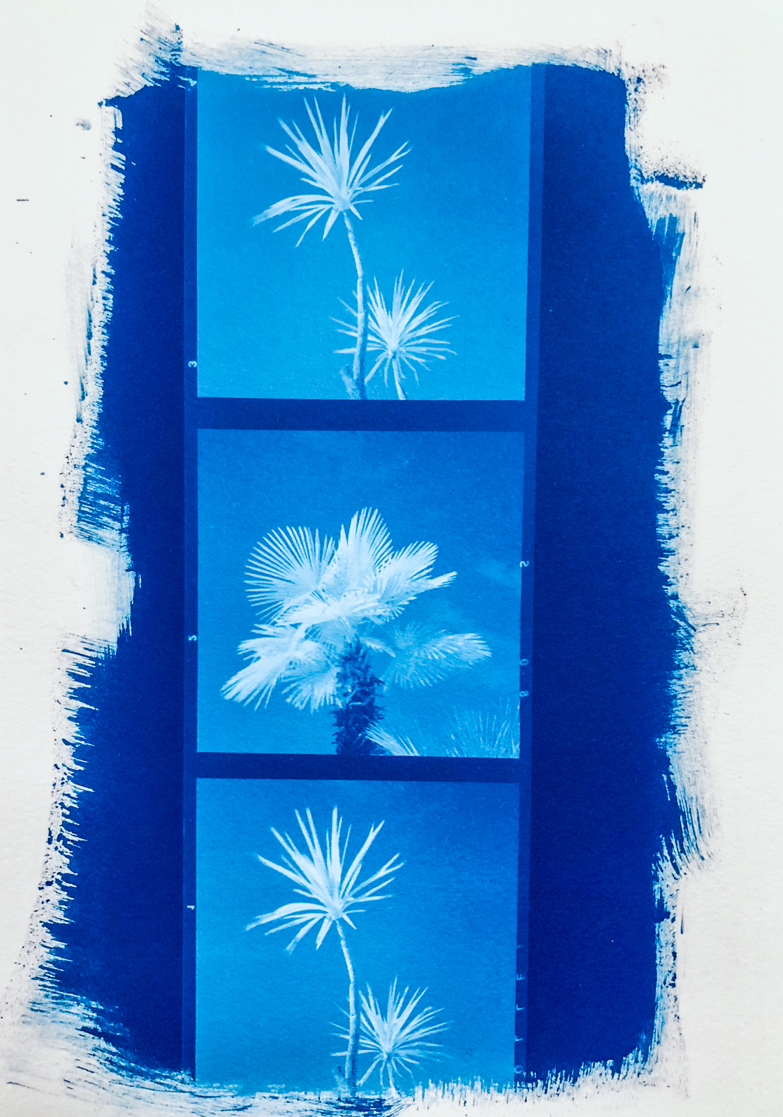 3-Cyanotype three trees