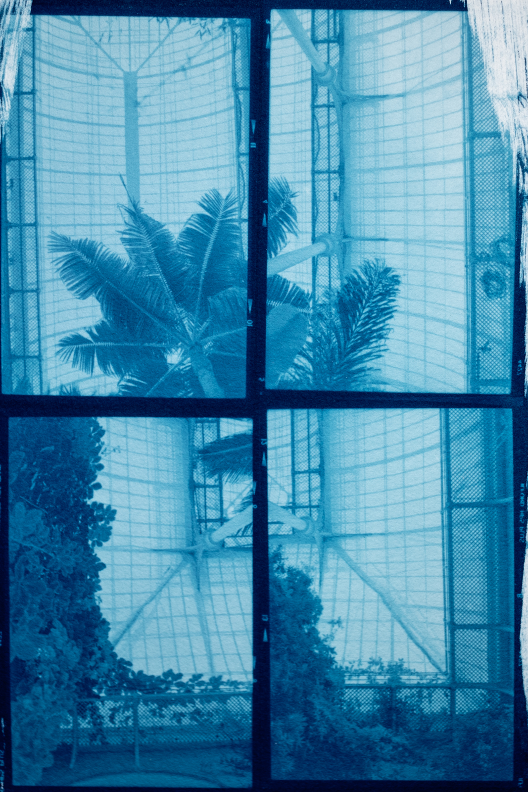 4-Cyanotype four