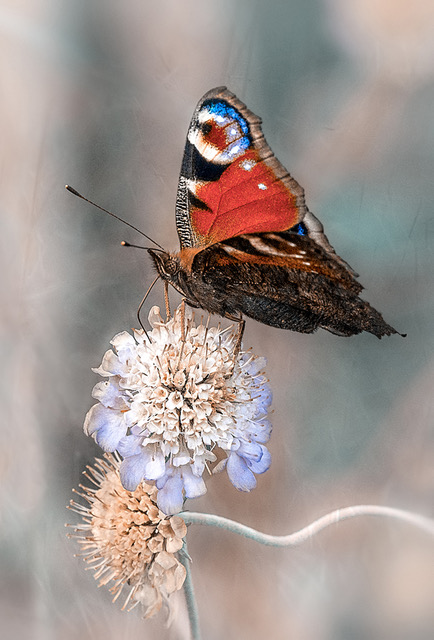 3-Nectar time