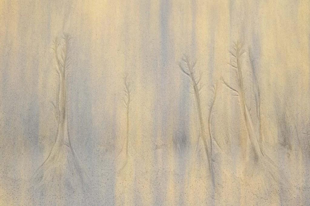"""Sand Forrest"" by Doug Berndt"