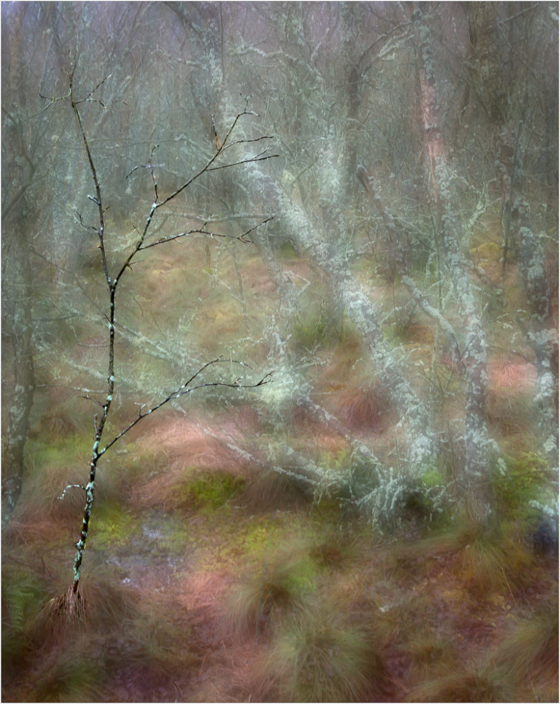 """Wooded Dream"" by Nigel Gillard"