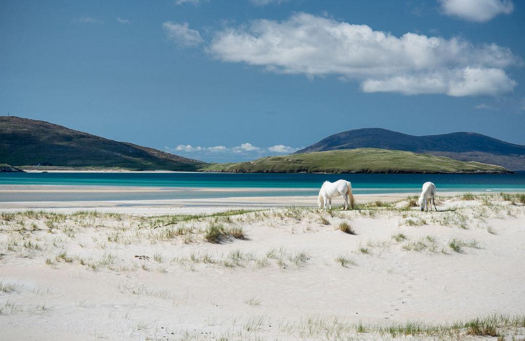 Luskentyre Horses by Neil McCoubrey