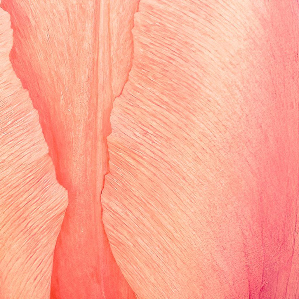 Alistair Cowan - 03 Orange macro