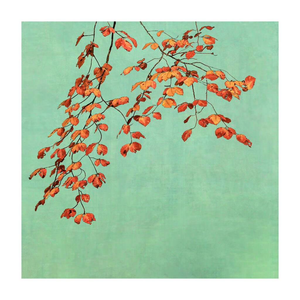 Alistair Cowan - Autumn Leaves