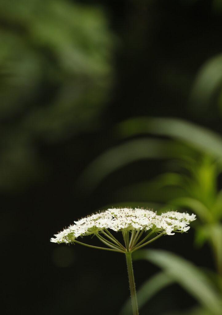Barbara Bartkowiak - Flower_and _Background