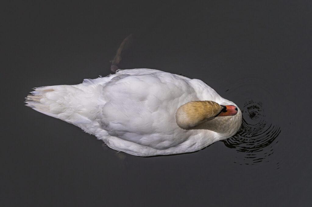 Brian Flemming - 03 - Birds-Eye View