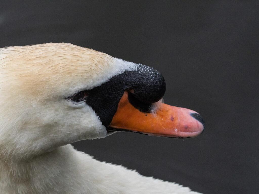 Brian Flemming - 06 - Swan