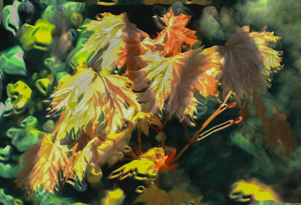 David Greer - Moshed leaves