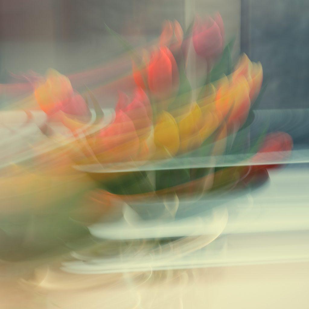 David Greer - Tulip Whish