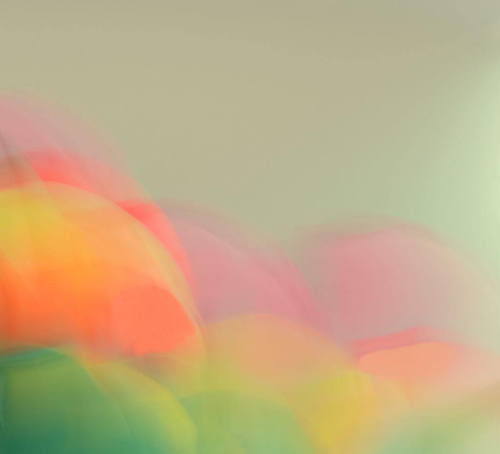 David Greer - Tulips-2