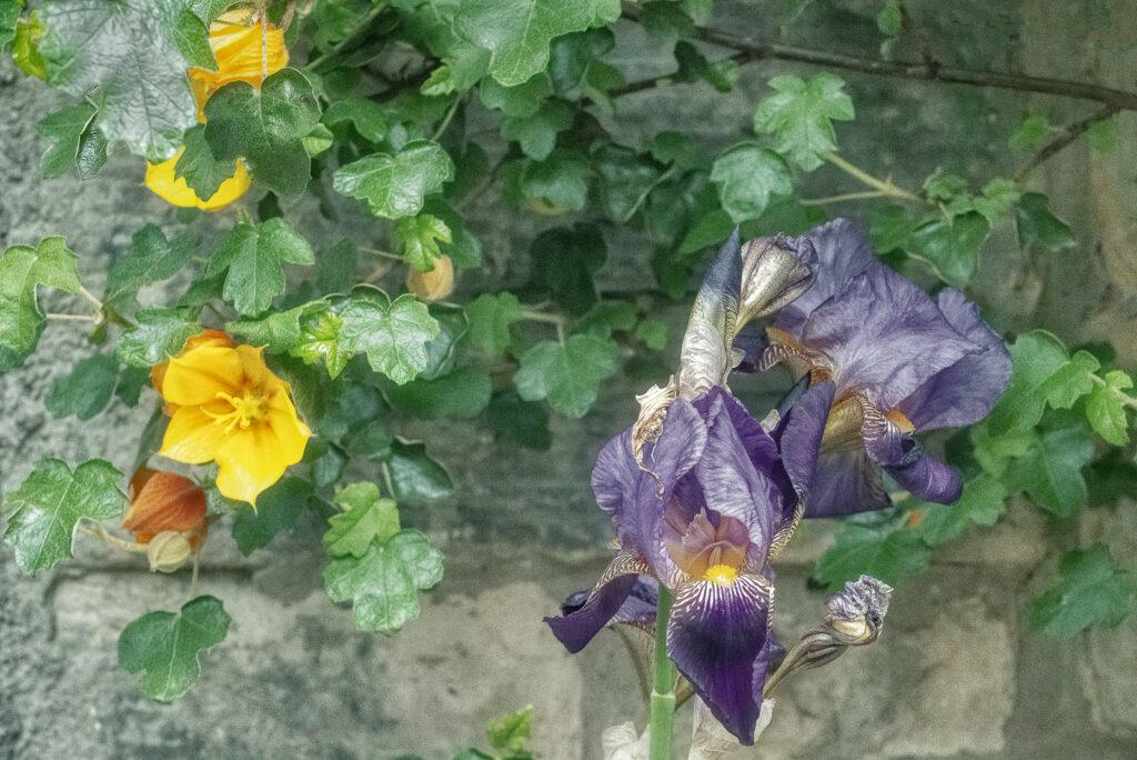 David Greer - wallflowers (1 of 1)