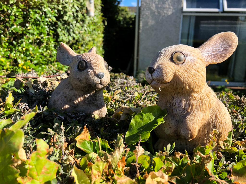 Doug Berndt - Lookout for Rabbits