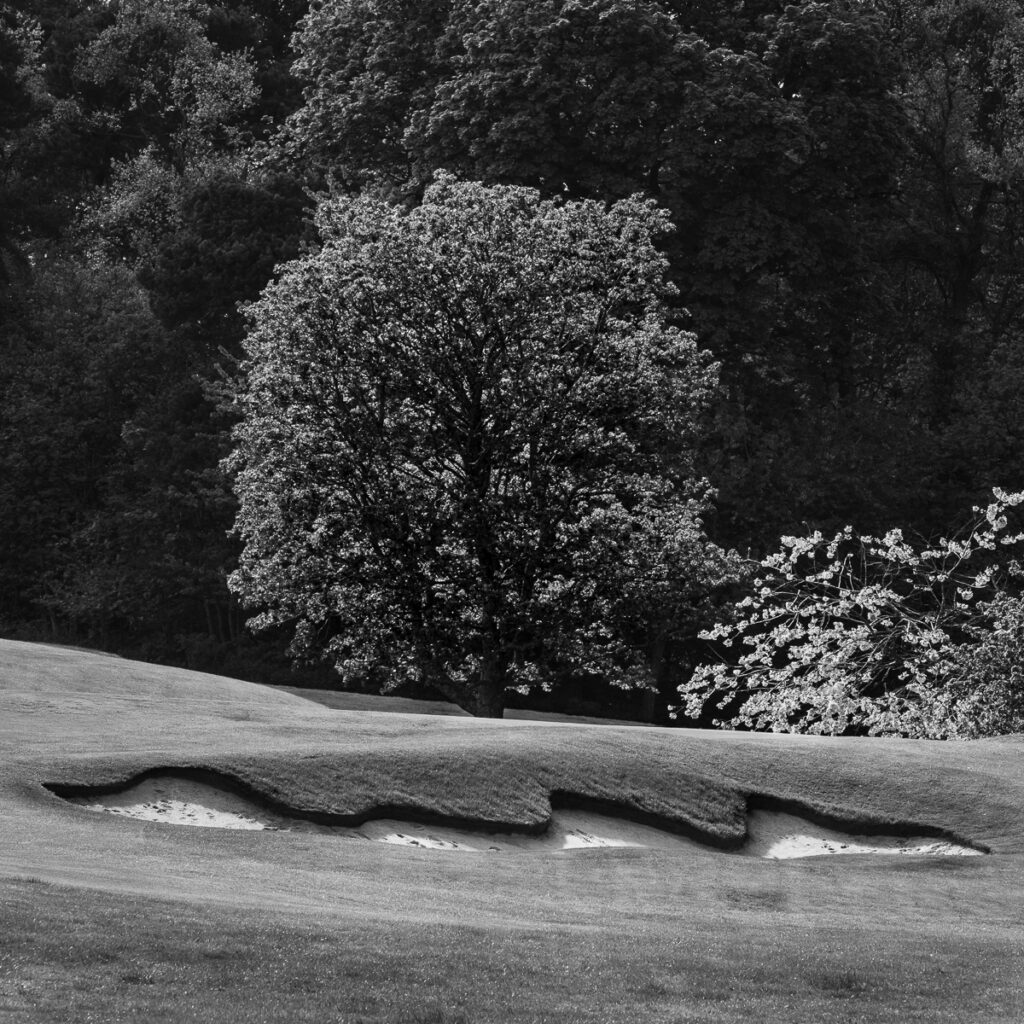 Doug Berndt - Mortonhall GC Trees and Bunkers-3