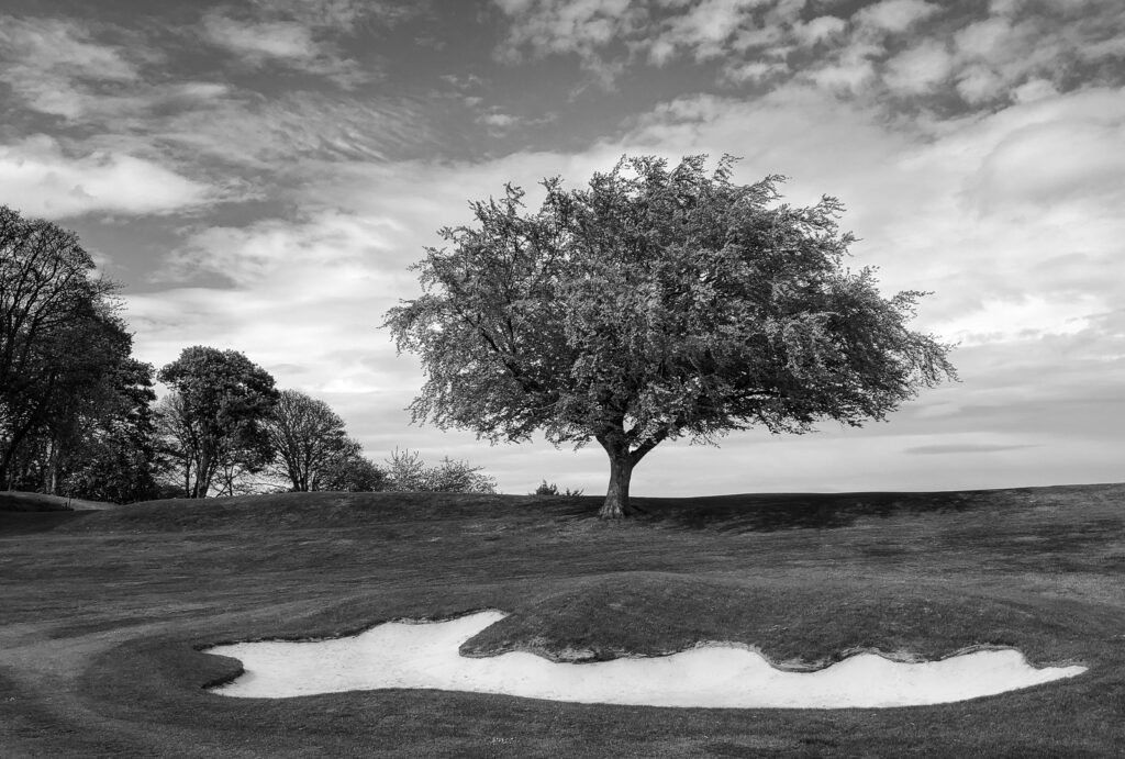 Doug Berndt - Mortonhall GC Trees and Bunkers-4