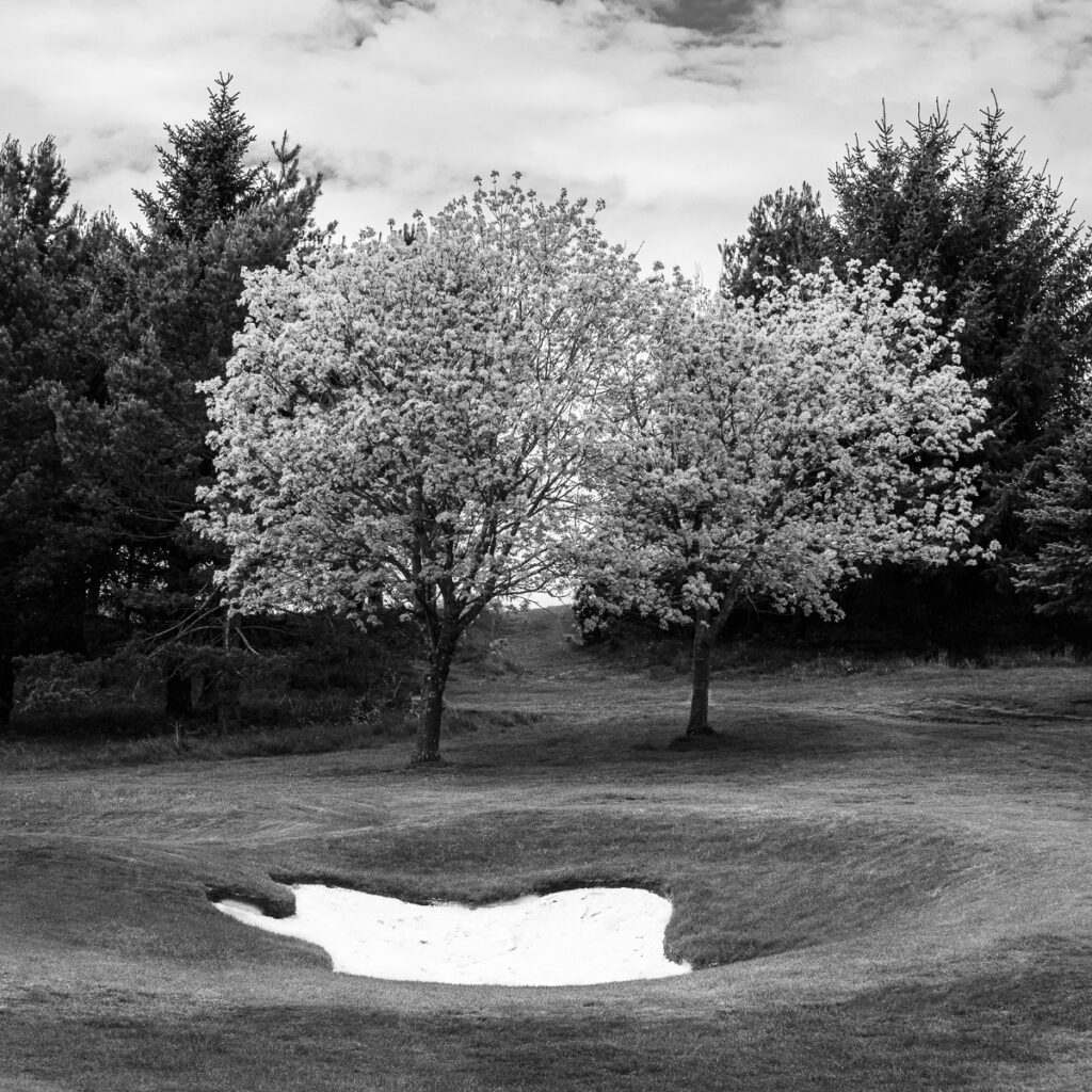 Doug Berndt - Mortonhall GC Trees and Bunkers-6