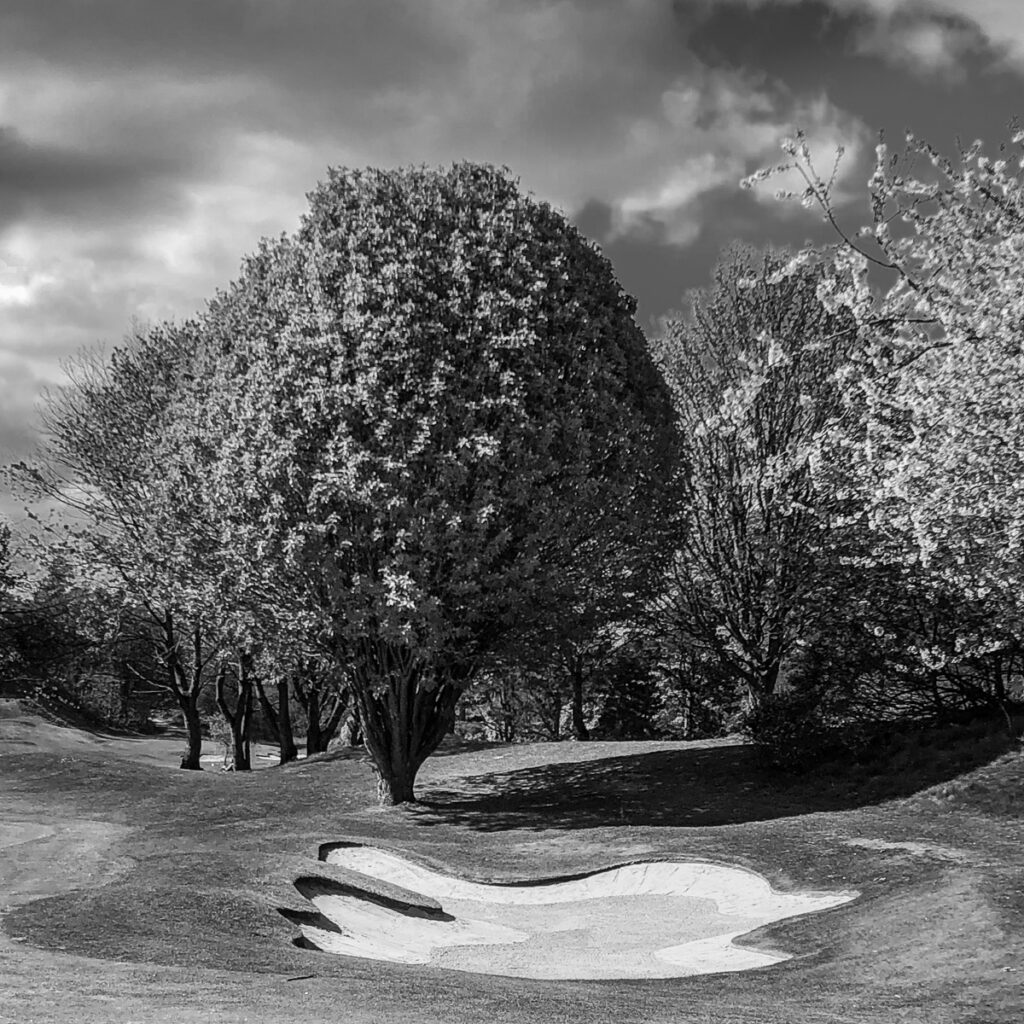 Doug Berndt - Mortonhall GC Trees and Bunkers-8