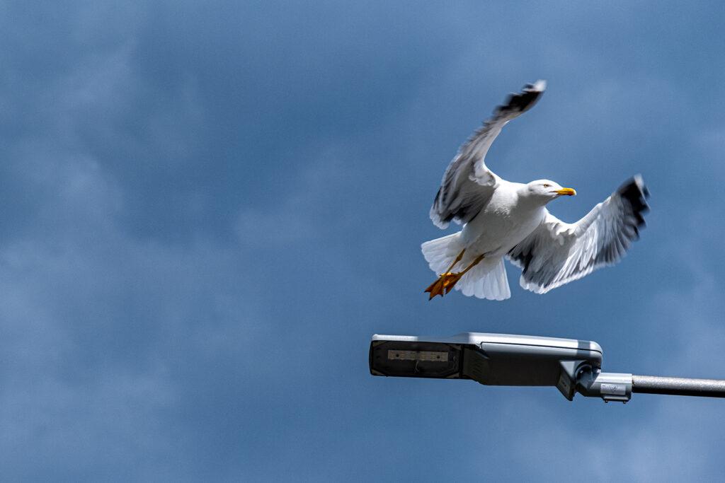 Frank Sala - Take off