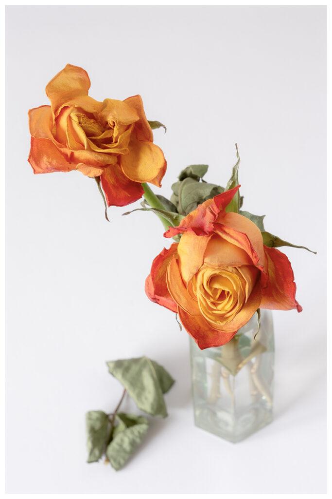 Frank Sala - Wilting Roses