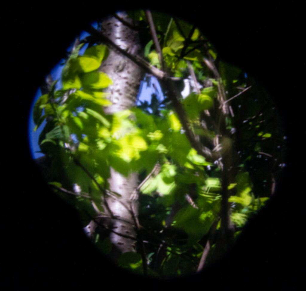 Isobel Lindsay - pinhole leaves