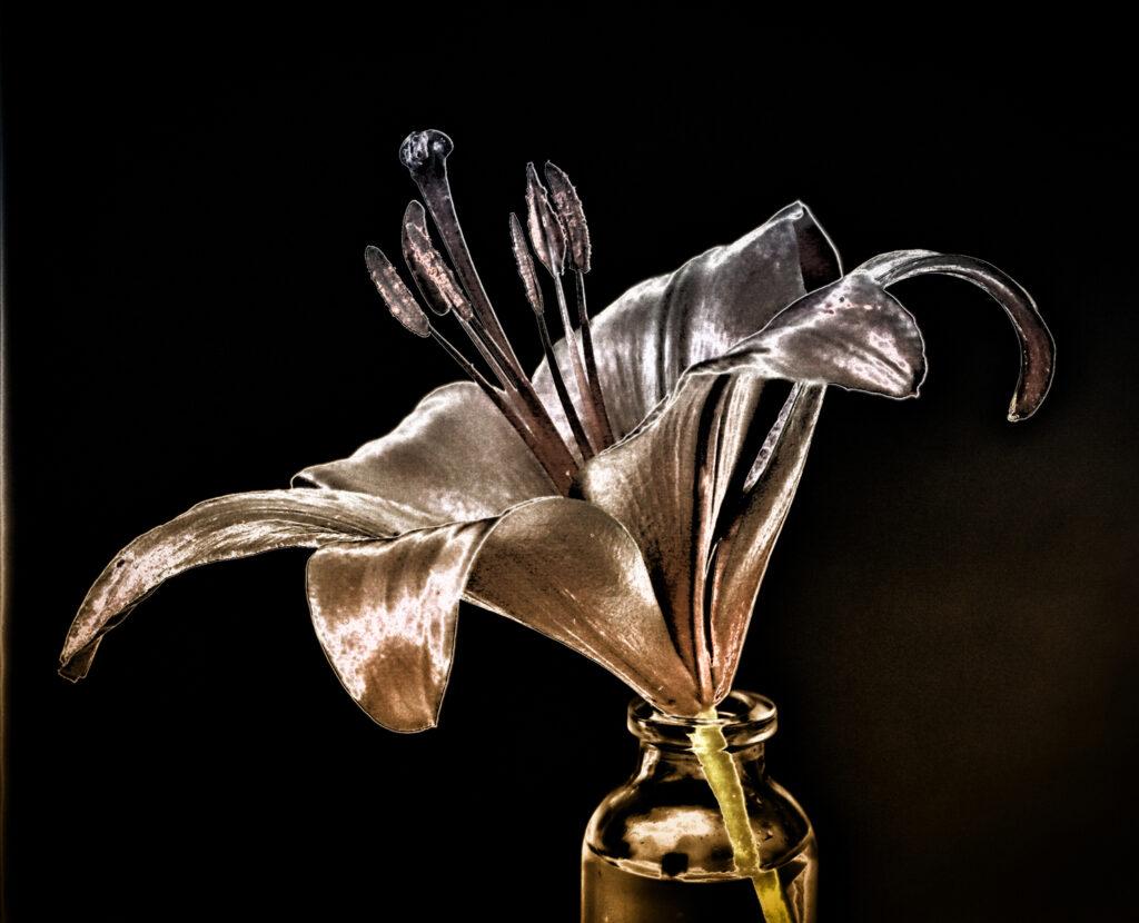 Krysia Kotowska - 10 Lily