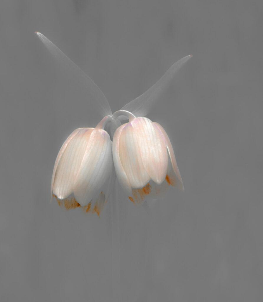 Krysia Kotowska - 5 Flowers