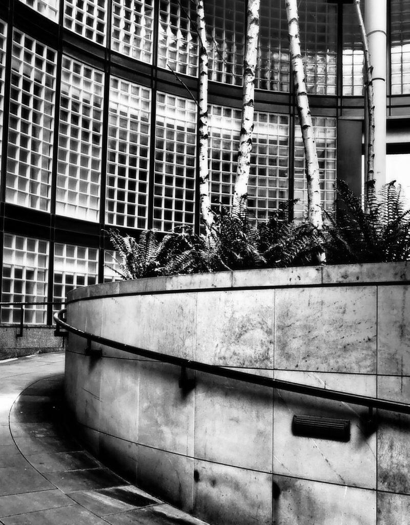 Mhairi Chambers - Trees and glass