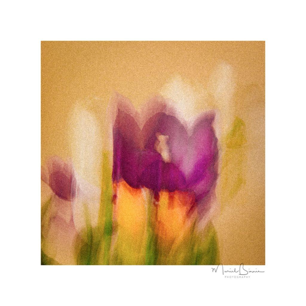 Muriel Binnie - 1 Tulips from Amsterdam