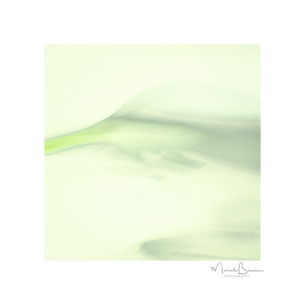 Muriel Binnie - With Ice and Lemon