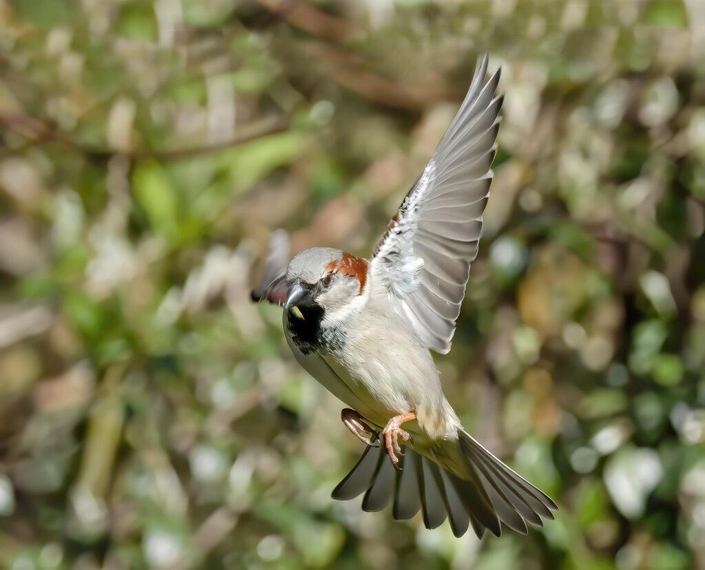 Neil Scott - sparrow